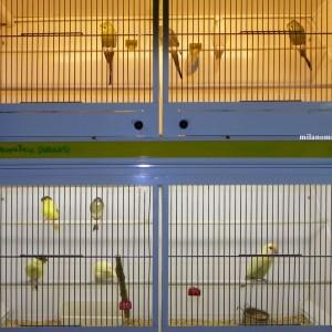 Animal_Garden