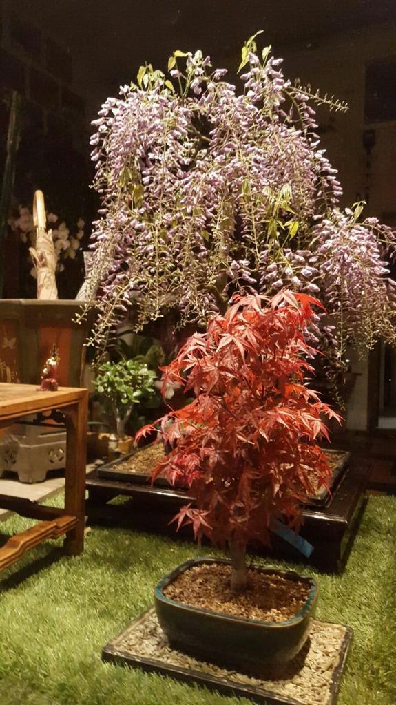 albonsai piante e fiori freschi bonsai milano