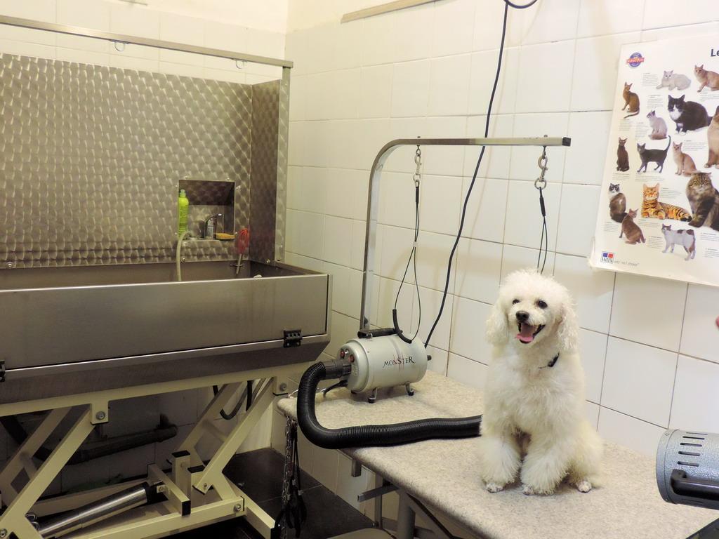 PELO E CONTROPELO articoli per animali e toelettatura via Cesare Correnti Milano