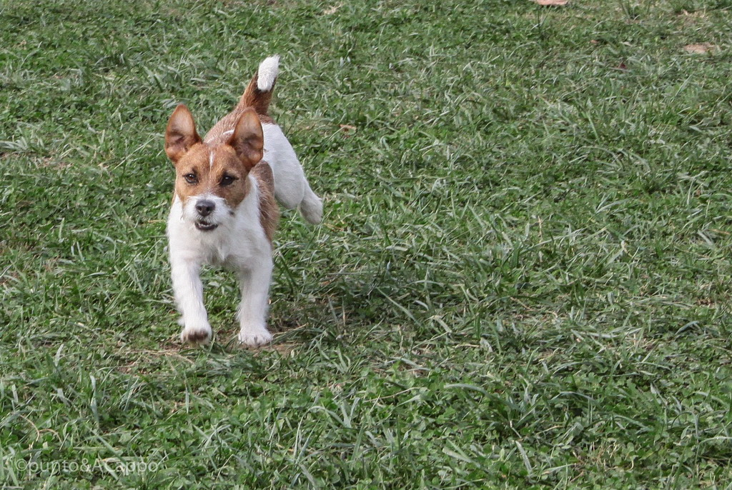ACSD Cinopolis Milano Addestramento nutrizione cani gatti